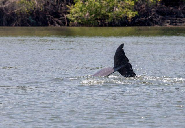 Los delfines nariz de botella son el atractivo del lugar.