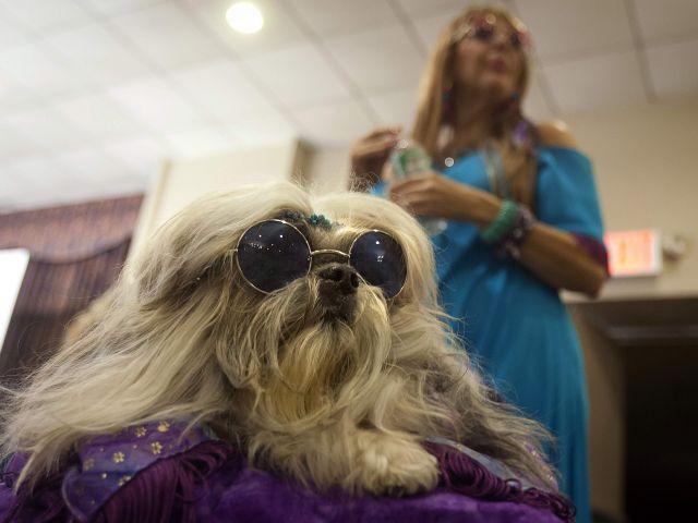 Un perro luce unas gafas en el New York Pet Fashion Show. Foto: REUTERS