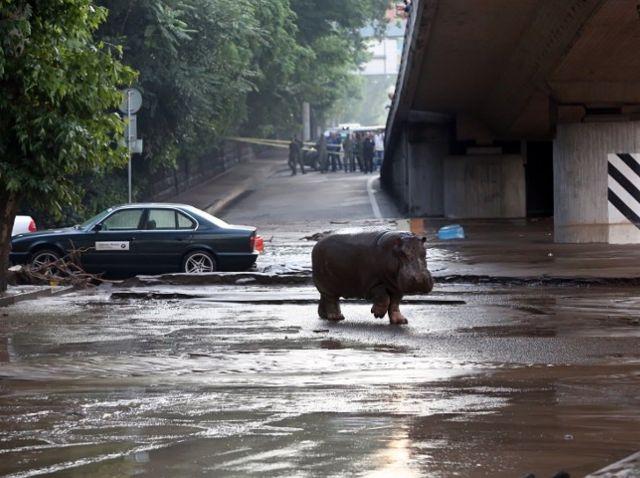Se desconoce el número exacto de animales que vagan por las calles la ciudad. Foto: AFP