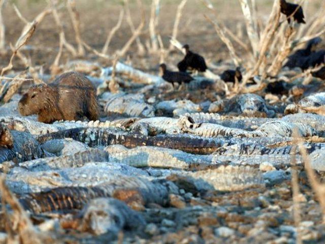 Un panorama desgarrador se vive en la zona del Pilcomayo, lado paraguayo. El terreno en la franja chaqueña está convertido en un pesado lodozal en parte y casi en un desierto en otros sectores.