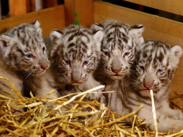 Zoológico de Blanca en Kernhof, Austria / Fotos: Reuters