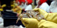 Tras siete meses de una medida que suspendía la importación del crustáceo, el país sudamericano permitirá el ingreso del producto. Foto: archivo