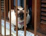 El estudio se inició a partir de una solicitud de la organización caritativa Cat Care.