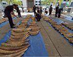 Fueron decomisadas más de 500 piezas, estimadas en unos 6 millones de dólares. Foto: AFP