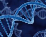 La investigación ha demostrado también que hay diferencias en la expresión de los genes relacionadas con el sexo, la etnia o la edad de las personas.