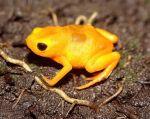 Las siete nuevas especies se unen a otras 21 ya existentes, endémicas de Brasil.