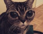 Foto: Alien Cat Matilda