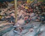 Se ordenó la destrucción del contenido de la nave (300 toneladas en especies de tiburones martillo y silky). Foto: cortesía