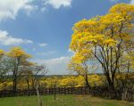 Zapotillo es uno de los cantones del sur de Ecuador que forman parte de la reserva de la biósfera declarada por a Unesco en 2015. Foto: Tomado de Twitter Betty Tola.