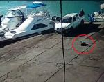En un video difundido por medios locales se observa cómo el hombre enciende su vehículo y pasa sobre el pelícano.