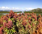 La biodiversidad es necesaria para garantizar nuestra alimentación y nutrición en el futuro. Foto: FAO/Claudio Guzmán.