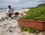"""En 1988 la Isla Henderson, en el Pacífico, fue inscrita en la lista del patrimonio mundial por su """"ecología casi intacta"""". Pero hoy se ahoga con residuos plásticos. Foto: AFP."""