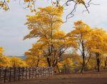 """Los """"Bosques de Paz"""" son uno de los lugares más importantes para la biodiversidad."""