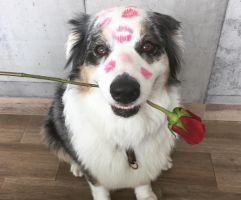 Dylan, en una foto especial para San Valentín. | Foto y video: tomados de la cuenta de Instagram de Romina Miraglia