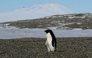 La Antártida en su conjunto fue particularmente afectada por el calentamiento global en 2016. | Foto: AFP.