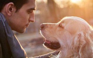 La especial relación entre hombres y perros ha sido el centro de múltiples investigaciones durante décadas. Foto referencial