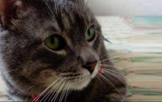 Se sostiene que el gato, de unos 7 años y tipo romano, se perdió cuando la nave hizo escala en Lima. Foto: Facebook Ana Benalcázar