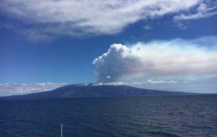 El director del Parque Nacional Galápagos (PNG) indicó que no está prevista la evacuación de animales de la isla. Foto archivo