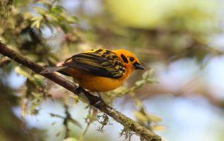 MADRID, España.- Ecuador está siempre en la lista de países más biodiversos del planeta. Foto: Twitter Viaja Ecuador.