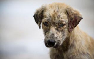 Actualmente, el COIP considera el maltrato o asesinato de mascotas o animales de compañía como una contravención.