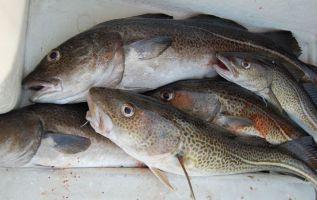 El aumento de la temperatura del mar y la sobrepesca, afectan a los niveles de metilmercurio en los peces.  Foto: Pixabay