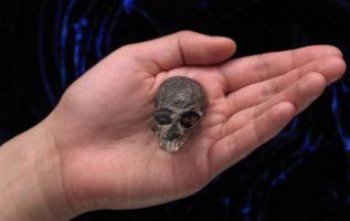 Único cráneo fosilizado conocido del extinto Chilecebus. Foto: AFP