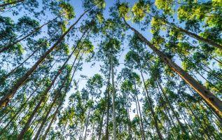 """Uruguay """"se está consolidando como una industria madura"""" en el terreno forestal."""
