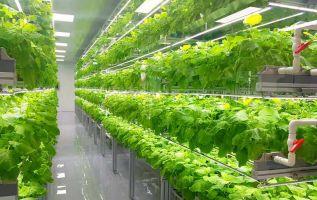 Además de combatir el cambio climático, las fincas verticales ayudan a reducir los costes de producción del agricultor.