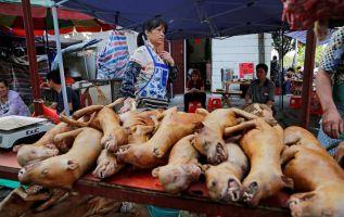 Las autoridades de Shenzhen consideran que comercio y el consumo de animales salvajes ha supuesto un gran peligro oculto para la salud pública. Foto: EFE.