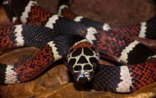 El bosque tropical del oeste de Ecuador es hogar de más de 190 especies de reptiles.
