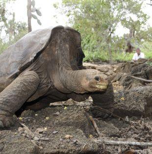Foto: Archivo / Ministerio del Ambiente.