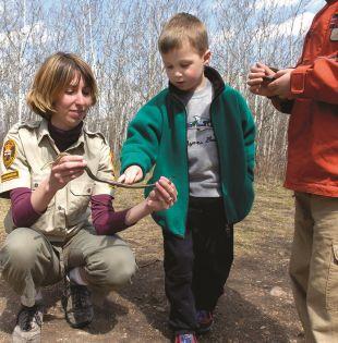Familias y escuelas van de campamento a Narcisse, en el centro de Canadá. Allí habitan unas 70 mil serpientes de liga.
