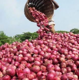 El contrabando y los bajos precios de la cebolla nacional hacen más difícil la situación de los agricultores.