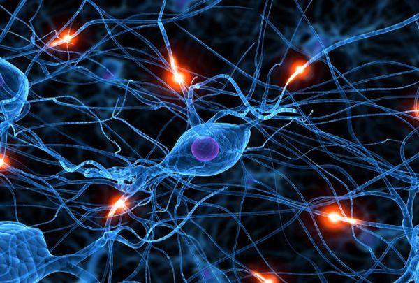 El hallazgo podría ayudar a entender mejor este órgano y las enfermedades neuropsiquiátricas.