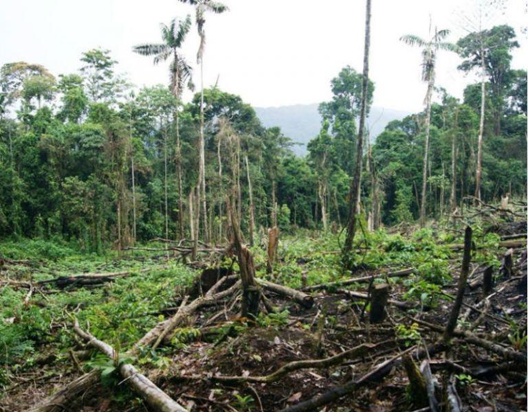 Foto: Gobierno regional de Amazonas (Perú).