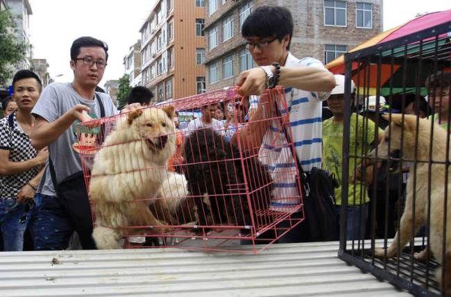 Los vecinos de Yulin, por su parte, han pedido que se respeten sus tradiciones.