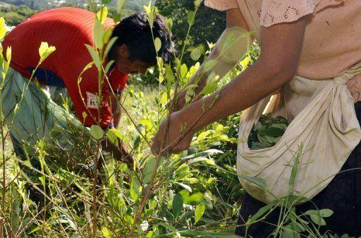 Colombia es el principal abastecedor de cocaína de  EE.UU, ha crecido en un 42 % entre 2014 y 2015. Foto: Internet