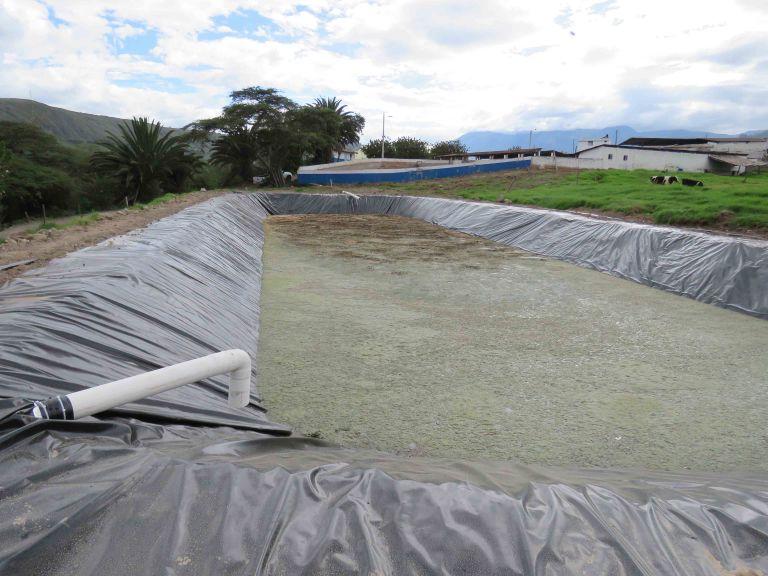 En mayo de 2015, Nestlé Ecuador fue parte del Récord Mundial Guinness en Reforestación organizada por el Ministerio de Ambiente. Foto: Cortesía