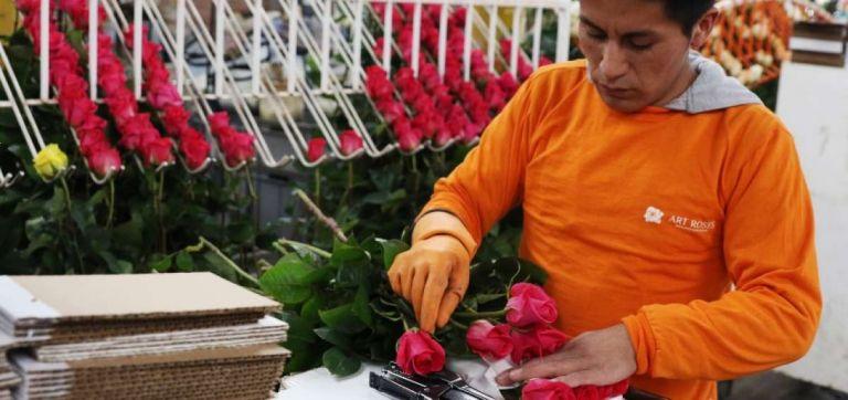 Ecuador es el principal proveedor de rosas a China con una participación del 51.83%. Foto: archivo Andes