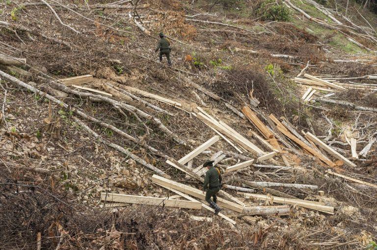 Los rastros del tráfico ilegal de madera están en toda Colombia. | Foto: Danilo Canguçu (SEMANA)