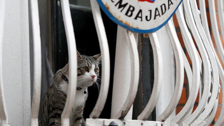 """El gato ha sido apodado por los medios como el """"embassy cat"""". Foto: Reuters"""