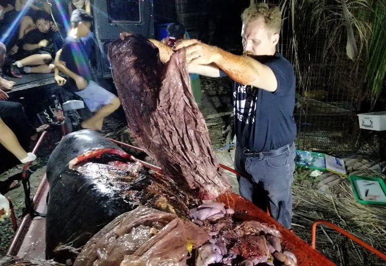 Darrell Blatchley, director de D 'Bone Collector Museum Inc., muestra los residuos plásticos encontrados en el estómago de una ballena. Foto: AFP