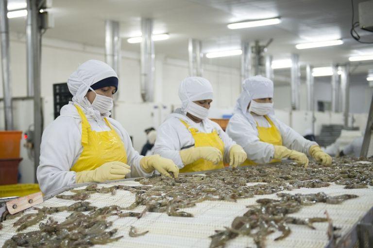 Las empresas exportadoras están invirtiendo sus recursos para aumentar su capacidad productiva. Foto: José Dimitrakis