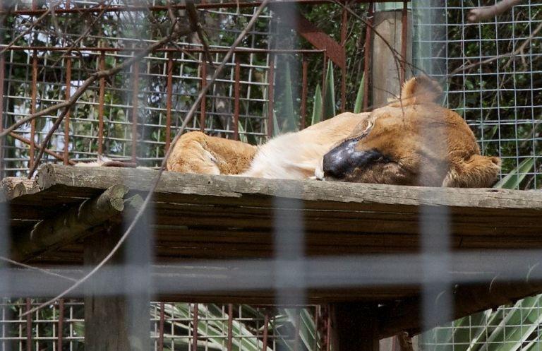 Fotos: World Animal Protection.