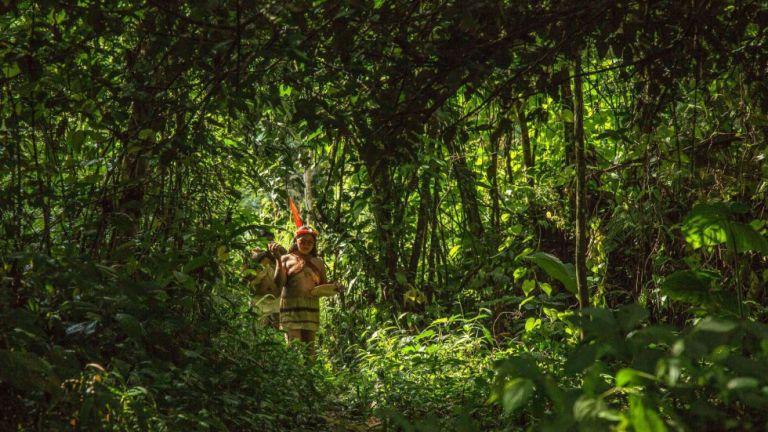 El increíble número de especies de árboles que se encuentra en los bosques amazónicos ha fascinado a los expertos. Foto: AFP.