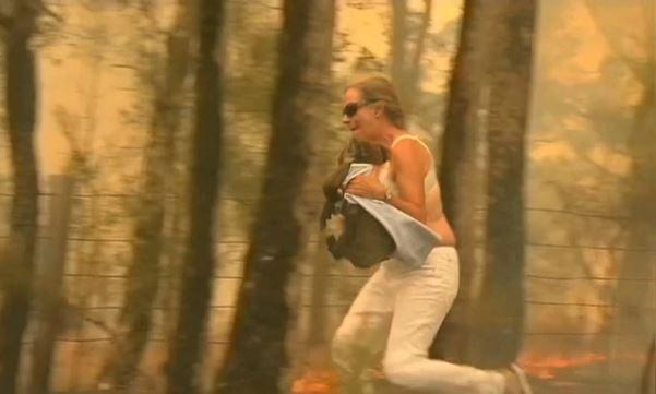 Toni Doherty salvó a un koala en Australia y el video del rescate se volvió viral (Reuters)