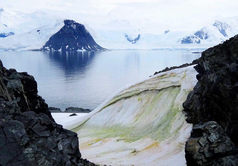 Foto tomada en 2018 y publicada por la Universidad de Cambridge el 20 de mayo de 2020 que muestra algas de nieve multicolores en la isla Anchorage, en la Antártida. (Foto AFP PHOTO / Dr Matt Davey - Universidad de Cambridge / SAMS)