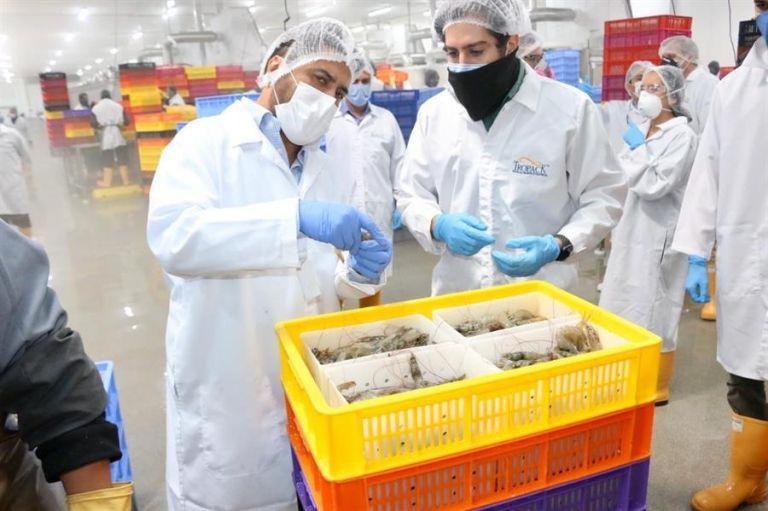China es el principal comprador de ese producto estrella al acaparar entre el 62 y 65 % del volumen total exportado. Foto: EFE