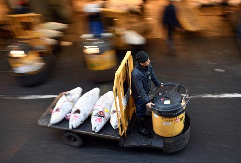 Un hombre transporta atunes congelados. Foto: EFE