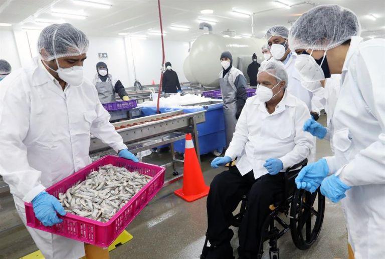 Con casi 4.000 millones de dólares en ventas al año, el camarón es el principal producto de exportación no petrolero del país. Foto: EFE